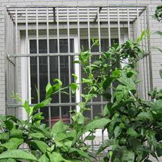 不锈钢防盗窗-外凸型  (适用于飘窗防盗、阳台窗)