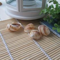 摆件海螺 c0179海螺