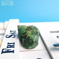 摆件海螺 绿螺海螺