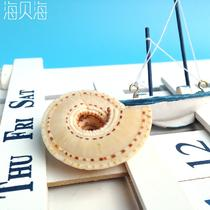 摆件海螺 C160海螺