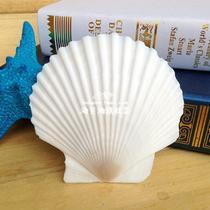 摆件贝壳 c0214贝壳