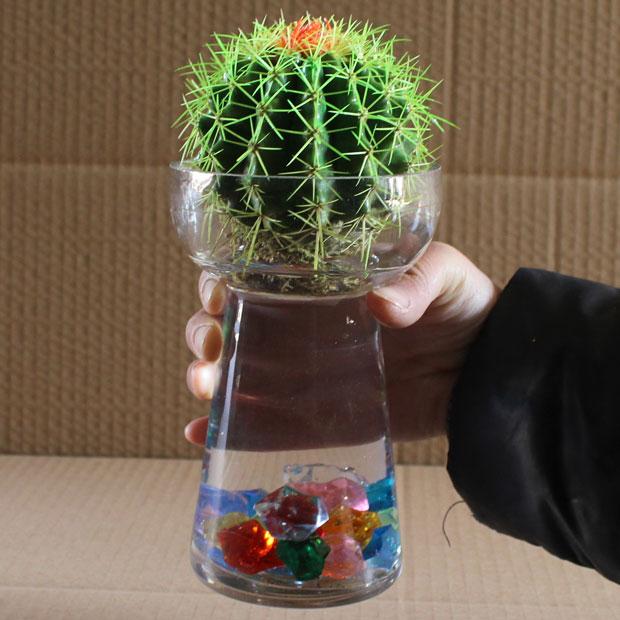 卫生间厨房卧室客厅 品牌 凯辉誉 植物类别 仙人掌 货号 金琥仙人球