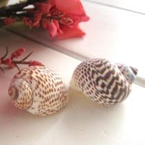 摆件海螺 c0089海螺