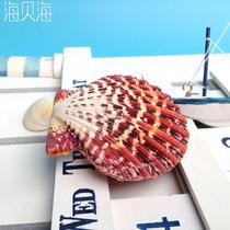 摆件贝壳 C0009贝壳