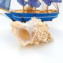 摆件海螺 C0025海螺