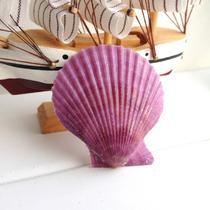摆件贝壳 c0181贝壳