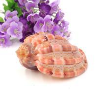 摆件海螺 C0074海螺
