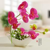 陶瓷简约现代 花盆