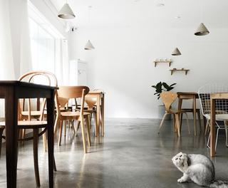 极简猫咪咖啡厅装修餐桌图片