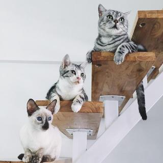 极简猫咪咖啡厅装修楼梯上的猫咪
