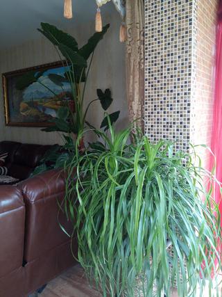 130㎡东南亚风格装修绿植图片