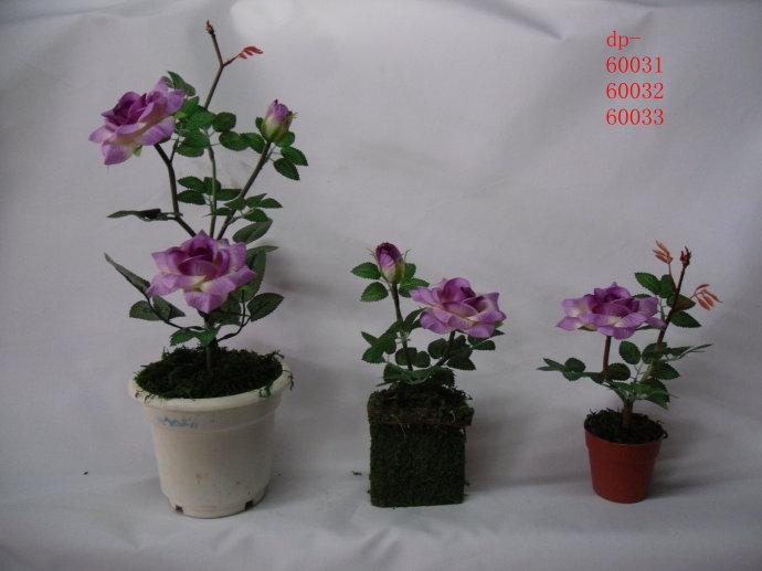 植物 塑造出 裝修