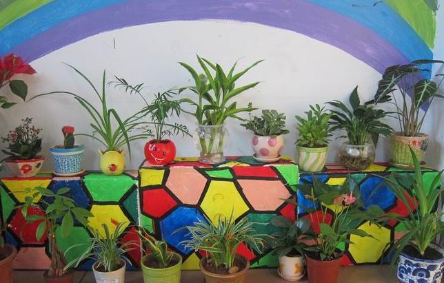 幼儿园 植物 装修