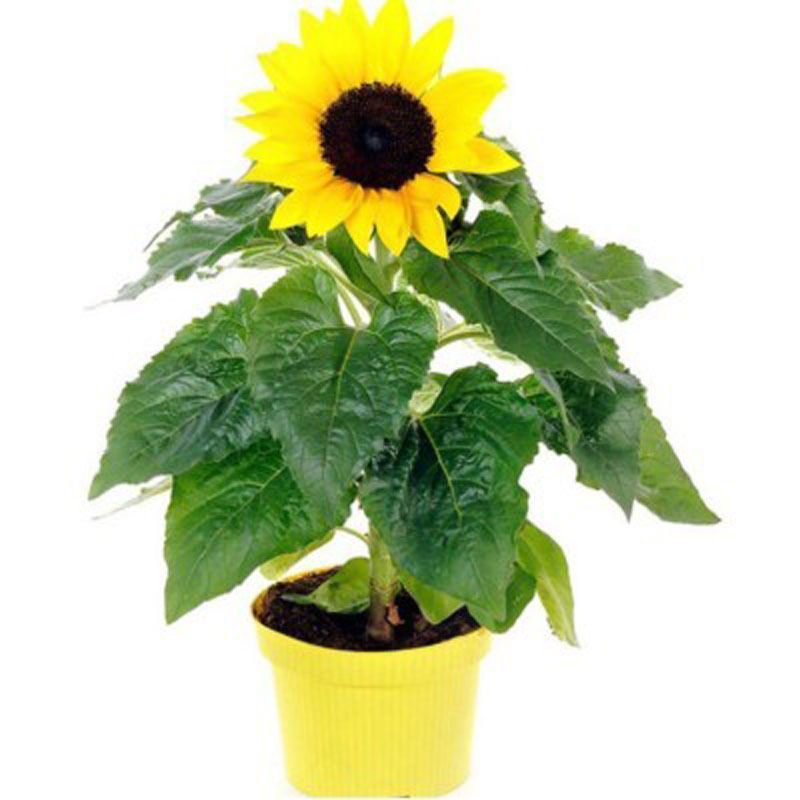 植物 简单
