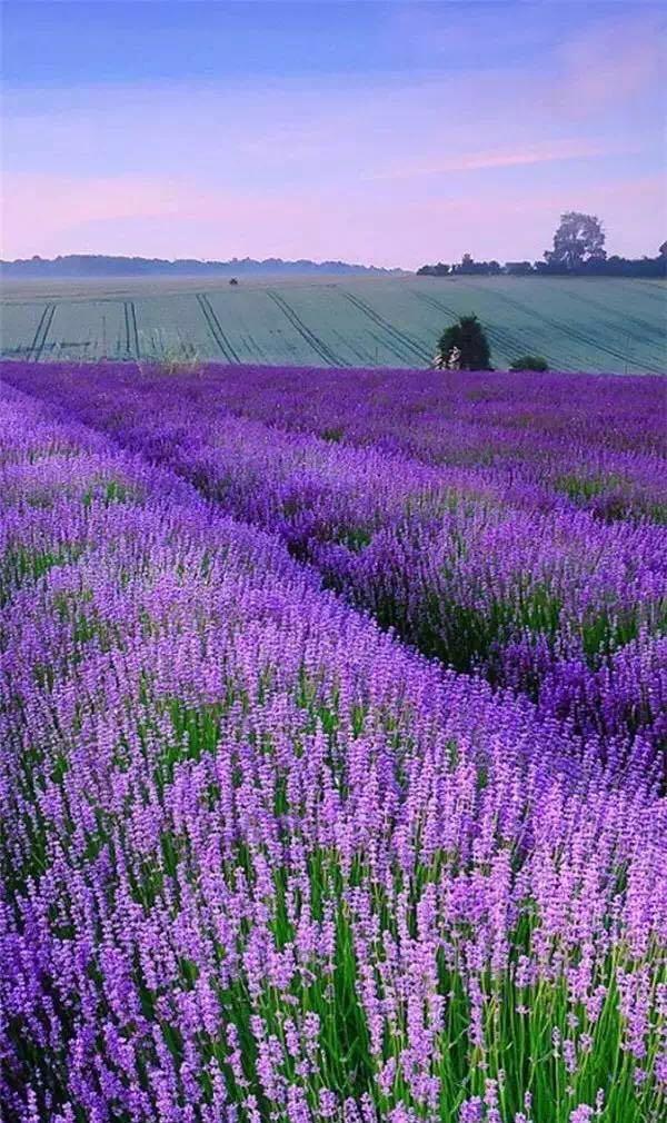 美观 紫色