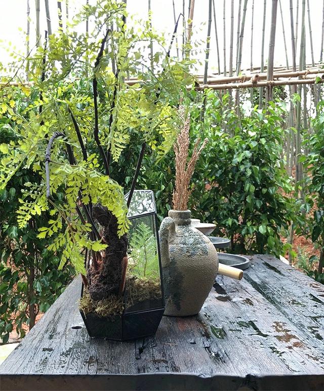 植物 塑造出 装修