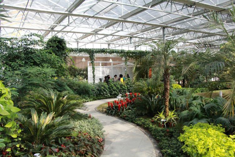植物 现代化 装修