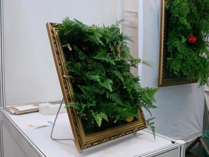 植物 安裝 裝修
