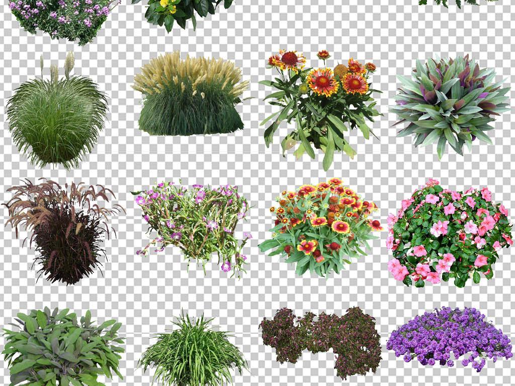 花卉 绿植