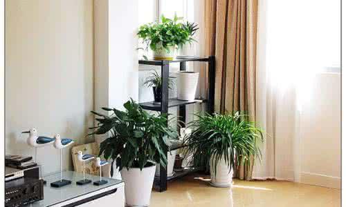 绿植 客厅