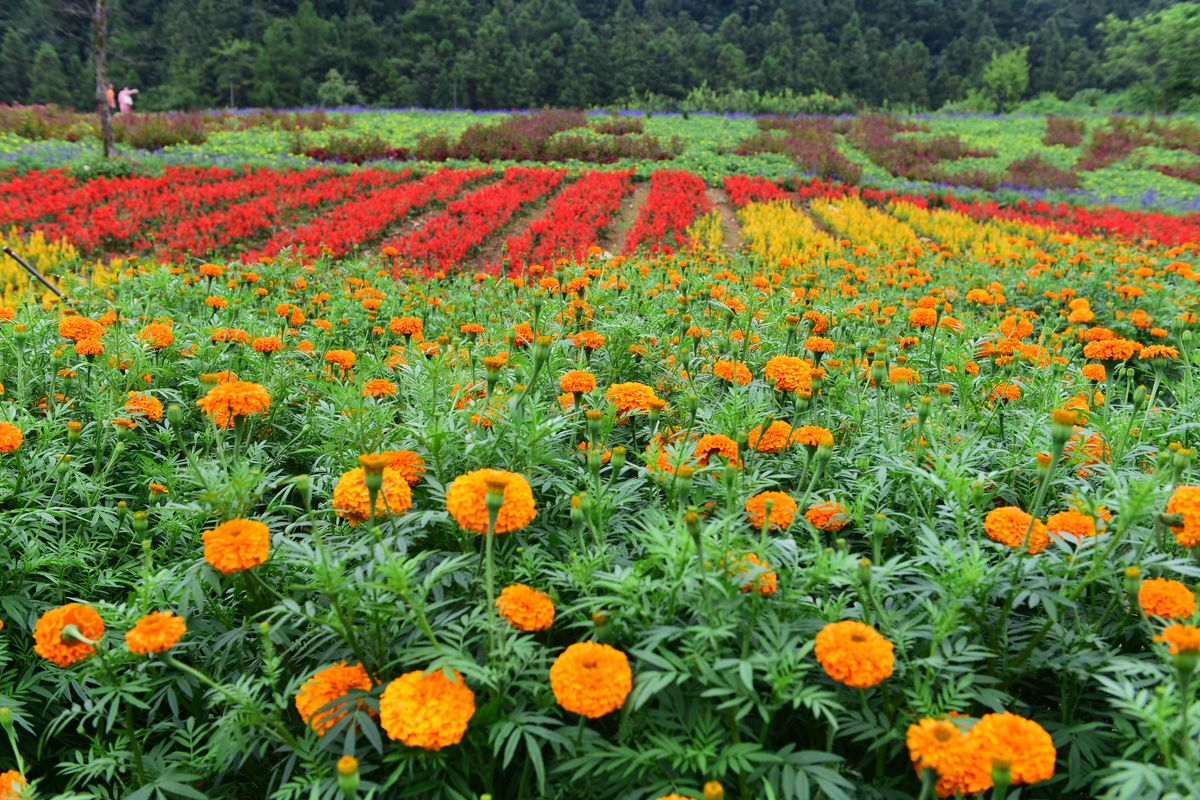 植物 养花