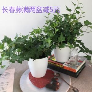 植物 同款 装修