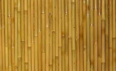 竹地板 竹林中