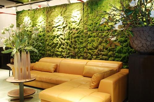 植物 防水 装修