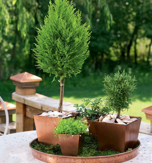 绿植 植物