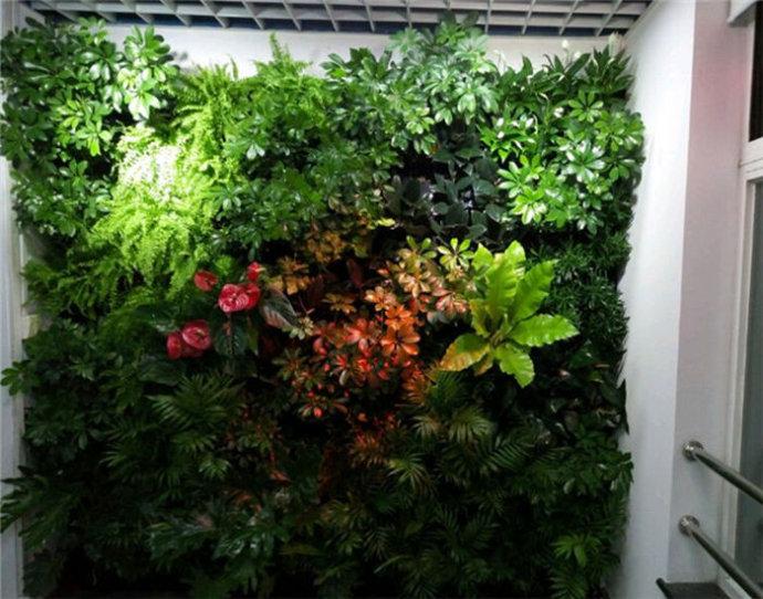 植物 选择 装修