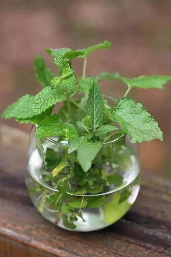 植物 透氣性 裝修
