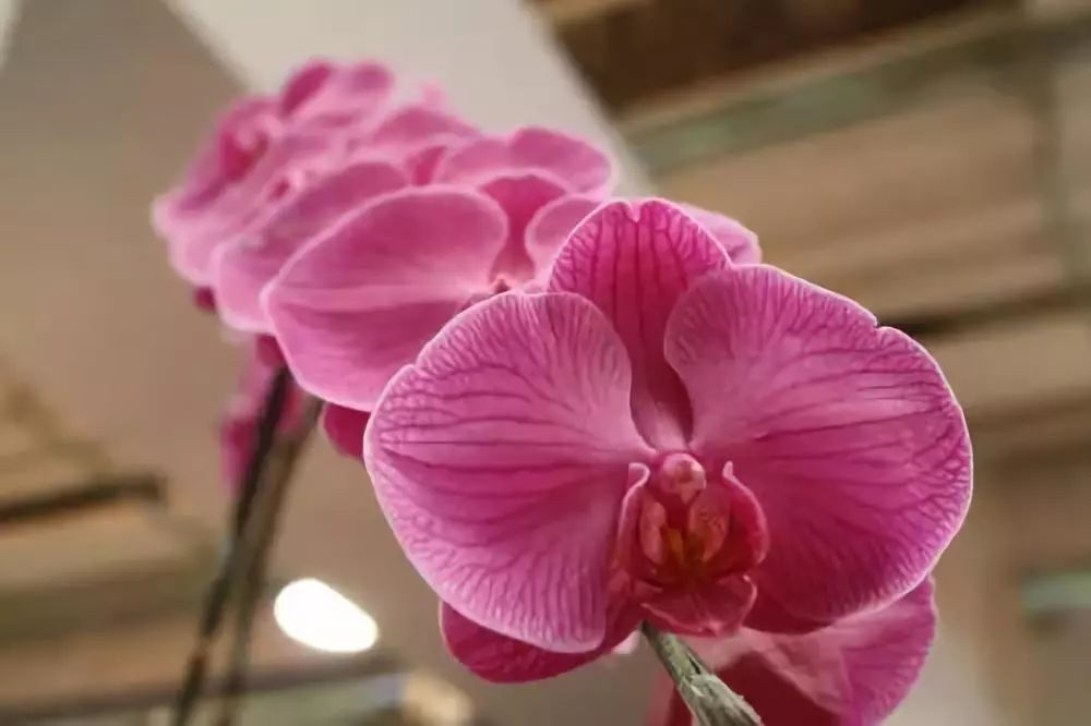 花卉 施加