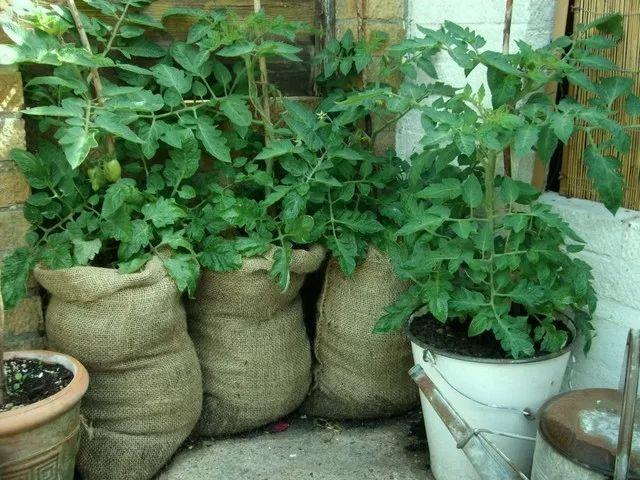 植物 布袋 装修