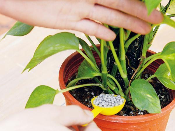 花卉 施肥