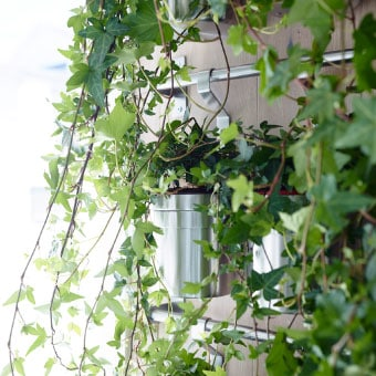 挂杆 绿植