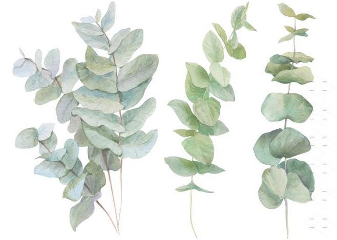 植物 北欧 装修