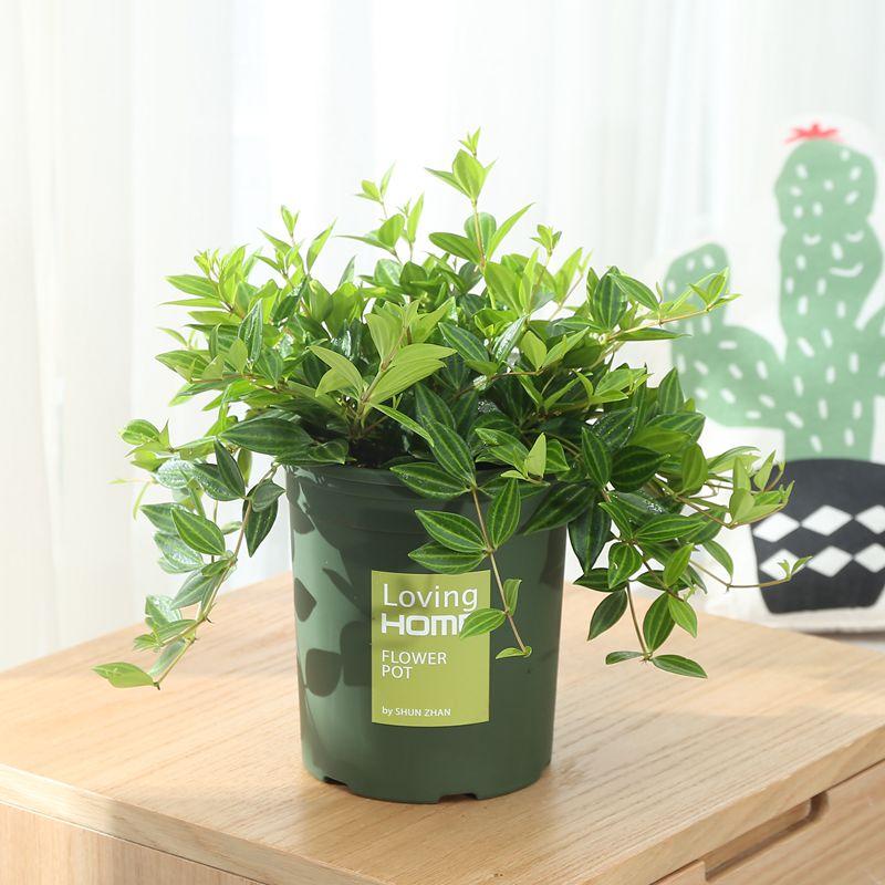 植物 好养 装修