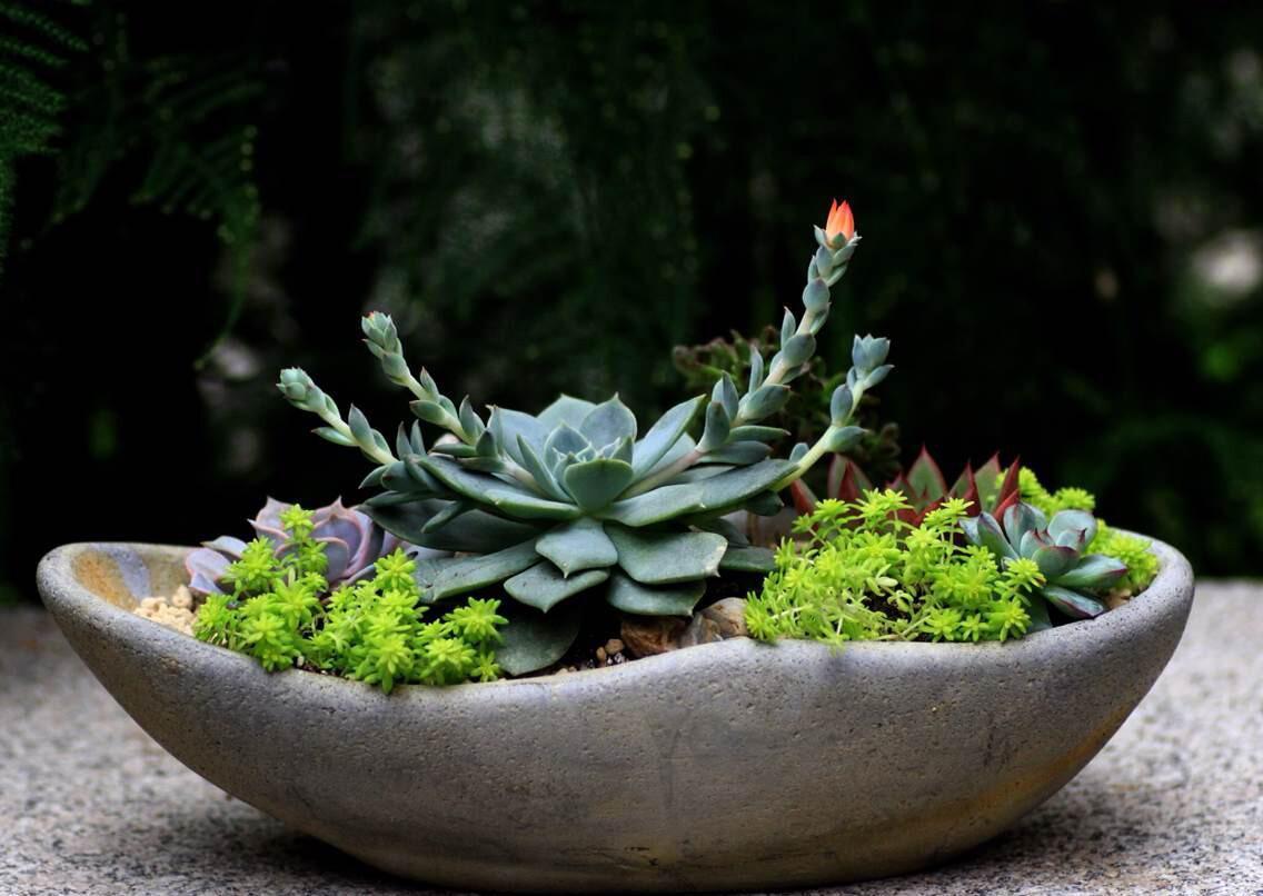 植物 透气性 装修