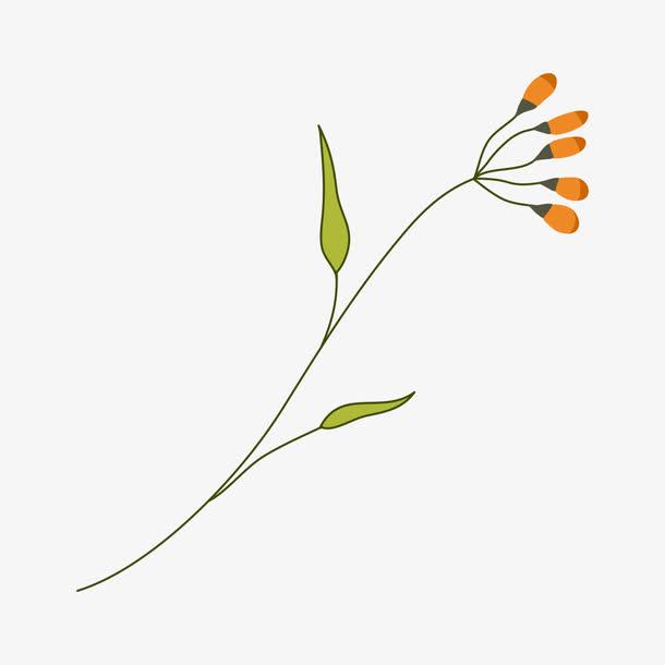 花卉 简单