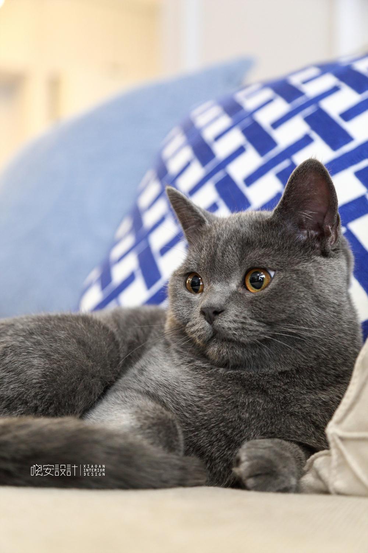 80㎡美式风格家可爱的蓝猫