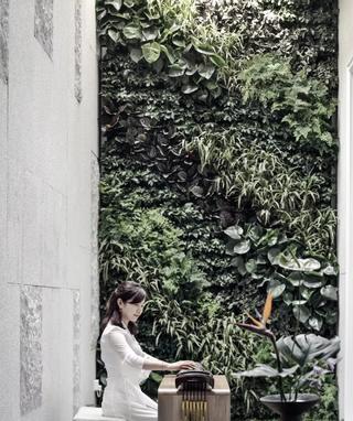 绿植墙设计效果图